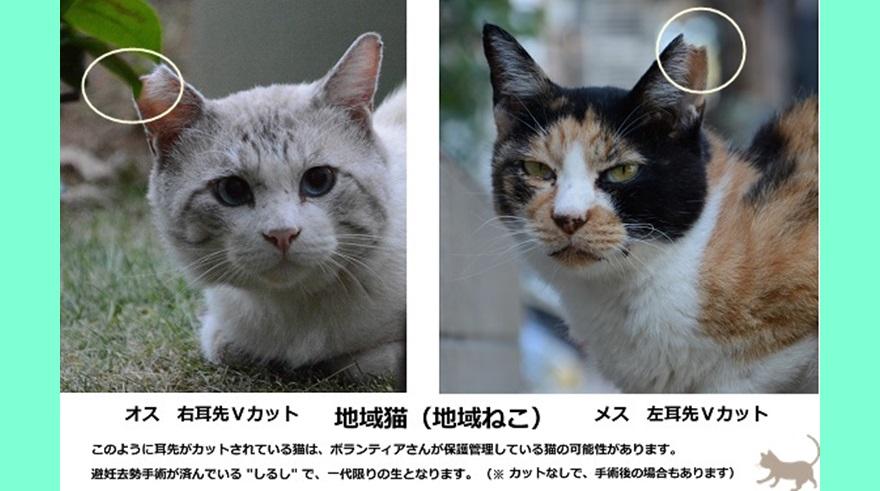 猫 避妊 手術 費用 安い